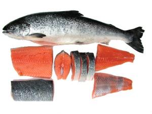 Salmon-fish-images